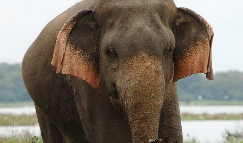 טבע ובעלי חיים בסרילנקה